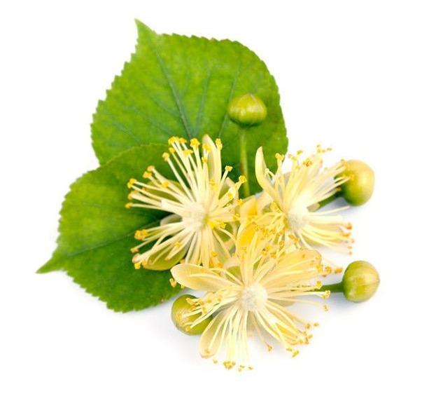 ZSK Naturalny olejek z drzewa herbacianego (antybakteryjny) 7ml